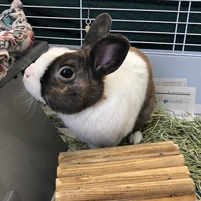 Brown and white rabbit in cage sitting on hay