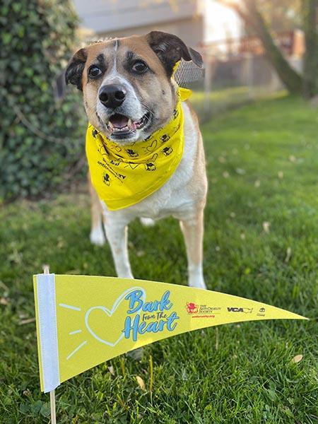 A cute dog stand behind a Bark From The Heart flag wearing a Bark bandana