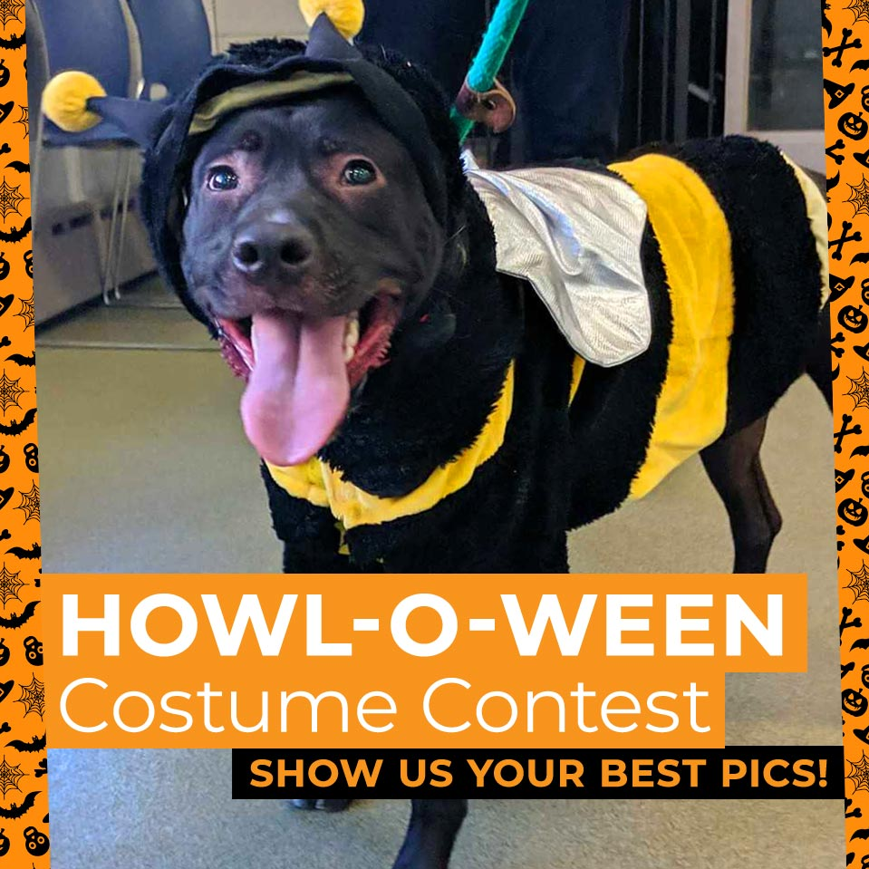 black dog in bee costume