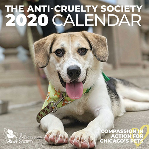 The Anti-Cruelty Society's 2020 Calendar featuring a happy brown and white dog on the cover