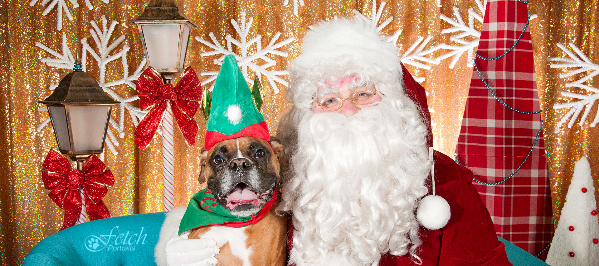 Brown and white boxer with green elf hat on sitting next to Santa