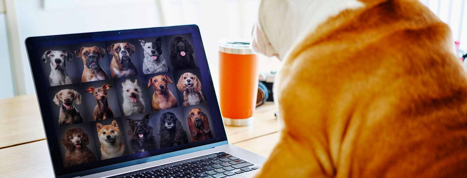A dog video chats with other dogs