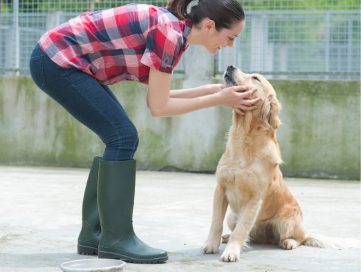Woman bending over caressing a Golden Labradors face.