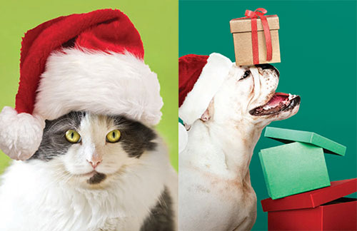 2019 Anti-Cruelty Society Holiday Cards