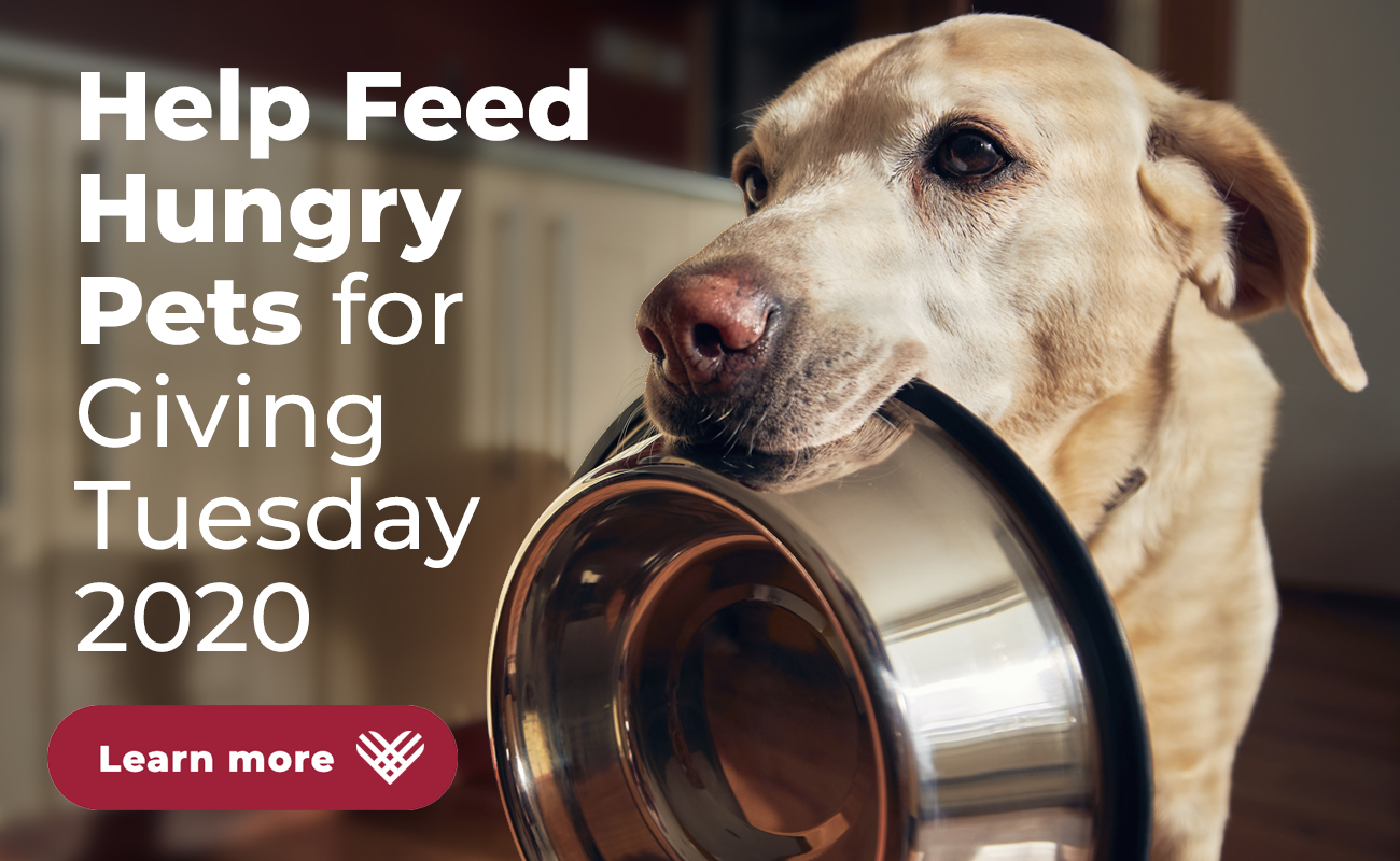 Help feed hungry pets