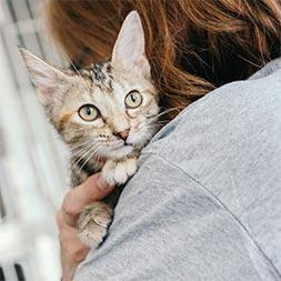 A female volunteer wearing a grey t-shirt holds a young cat closely