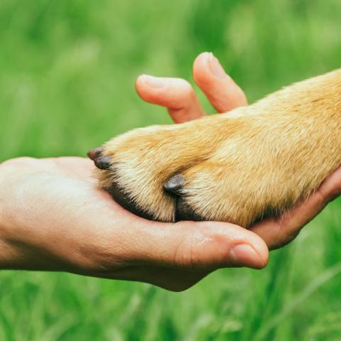 human hand holding a brown dog paw with grass under them