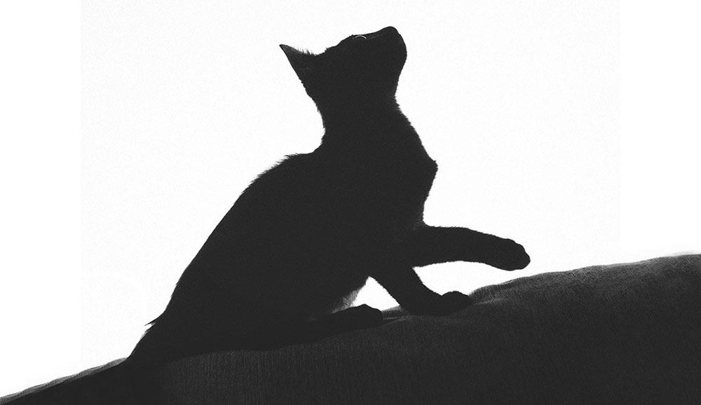 A silhouette of a small cat on a white background