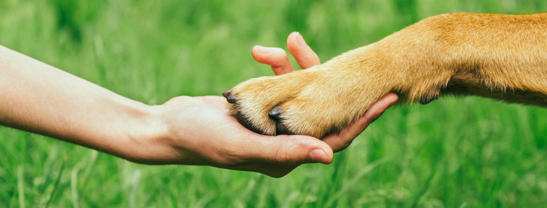 Human hand holding dog paw with grass behind them