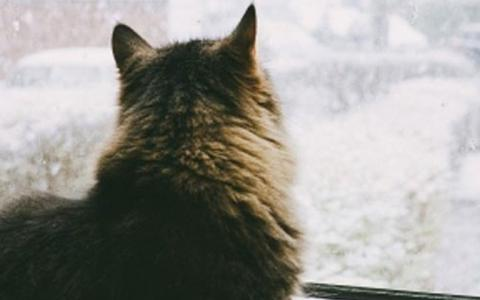 A long-haired cat looks out a window in winter