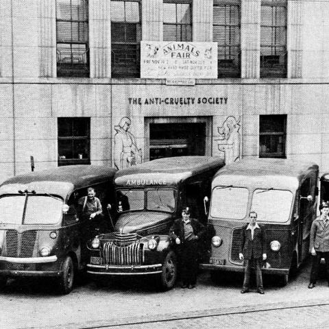 Five old vehicles parked outside The Anti-Cruelty Society building in the 1920's