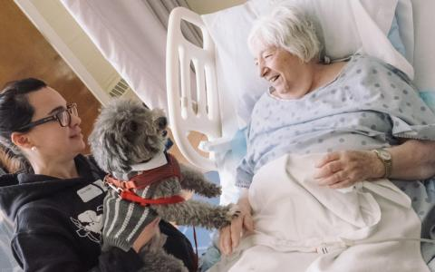 An elderly woman in a hospital bed visits a small grey dog