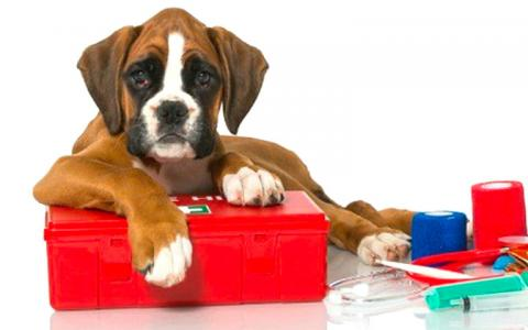 A brown and white puppy poses with colorful pet first aid supplies