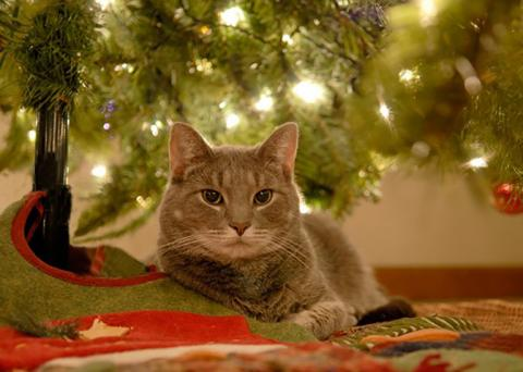 A tabby cat sits under a holiday tree