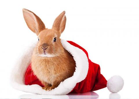 A red bunny sits in a holiday hat