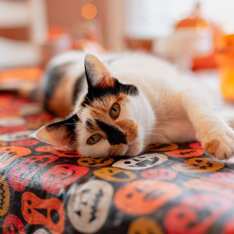 Orange and Black Cat laying on pumpkin table cloth