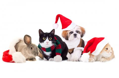 A bunny, two cats, and a dog pose with holiday hats