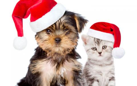 Puppy and kitten in santa hats