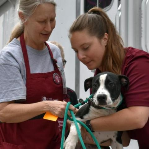 Woman in red shirt handing dog to woman in red apron